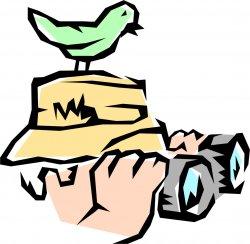 birdwatching birdwatching.250px